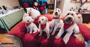 В квартирах разрешат без согласия соседей содержать не более 2 животных