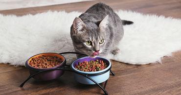 Ученые рассказали, как правильно кормить кошек.