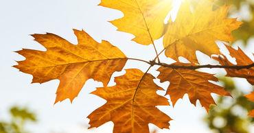В следующие дни в Молдове сохранится теплая и солнечная погода.