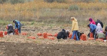 Выдвинуто новое предложение по поддержке молдавских фермеров.