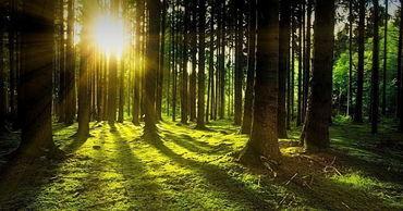 Прогнозируемые изменения климата могут положительно сказаться на росте лесов.