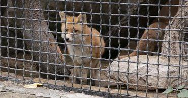 Кишинёвский зоопарк и его обитатели готовятся к зиме.