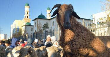 В Бельгии назвали условие отмены запрета на ритуальный забой скота.