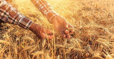 Принято положение о компенсации потерь в сельском хозяйстве. Фото: moldpres.md.