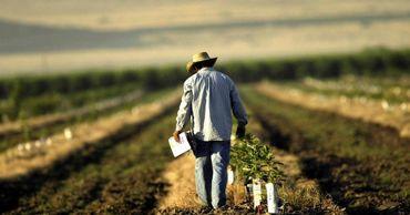 Аграрии Тараклии подали заявок на 25 млн леев для получения субсидий.