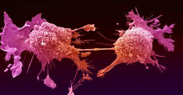 В раковых клетках обнаружены гены-обманщики иммунной системы.