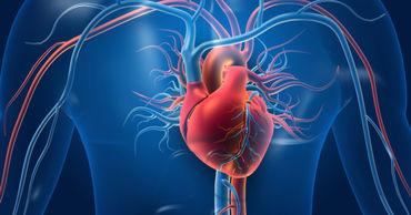 Создан первый в мире атлас клеток сердца.