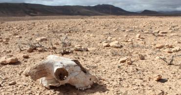 Ученые предрекли земле «вторую волну» вымирания животных.