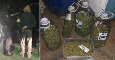 Полиция задержала членов ОПГ и изъяла марихуану на 400 тысяч леев