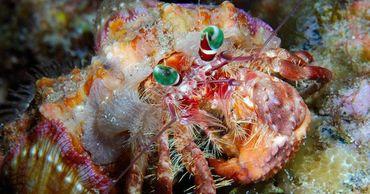 Экологи назвали морских существ, которые защищают людей от вирусов.