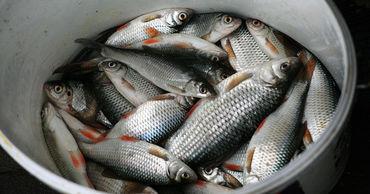Происхождение рыбы будет проверять Инспекторат по охране окружающей среды.