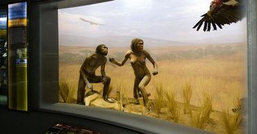 """Ученые подтвердили, что """"человек прямоходящий"""" жил на территории Кении"""