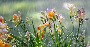 В Молдове в выходные дни будет прохладно, местами пройдут дожди.