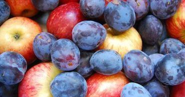 ANSA: Молдавские фрукты экспортируются в 20 стран мира.