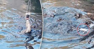 Аллигатор выиграл у любопытного туриста в перетягивании планшета.