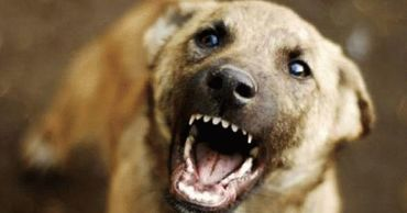 В Приднестровье трое детей оказались в больнице после нападения собаки.