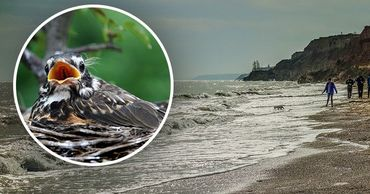 Аномальная зима на Украине: птицы гнездятся, рыба готовится к нересту.