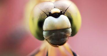 Полмиллиона видов насекомых уже находятся в фазе ��ымирания