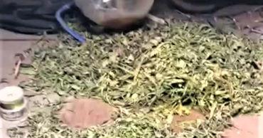 У жителя Гратиешт изъяли наркотики на 100 000 леев.