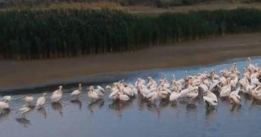 Сотни птиц попали на видеокадры, снятые с дрона.