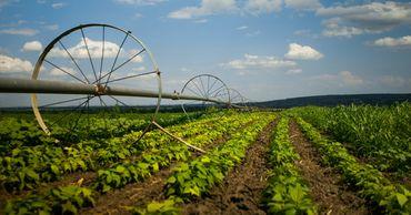FAO проведет оценку воздействия субсидий в сельском хозяйстве. Фото: gagauzinfo.md.