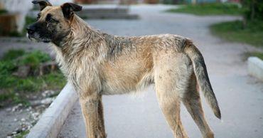 Жители Каушан жалуются на бродячих собак. Фото: canal3.md.