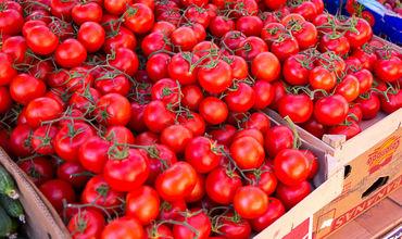 На рынках страны появятся первые молдавские помидоры