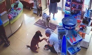Собака с раненой лапкой зашла в аптеку и попросила о помощи