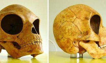 В Дании обнаружили череп пришельца.