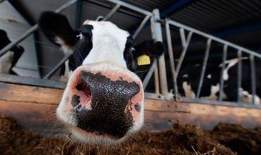 Румыния готова продолжать поддерживать ветеринарные услуги в Молдове.