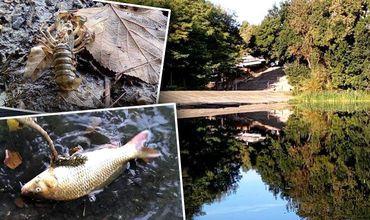 В Солдатском озере на Рышкановке массово гибнет рыба