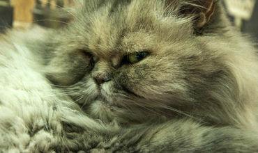 Завара назвал фирму назвал в честь своего старшего кота Аполлона.