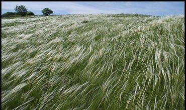 В позапрошлом году Украина закупала семена ковыля.