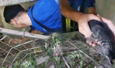 Столичные пожарные спасли застрявших в подвале дома котят