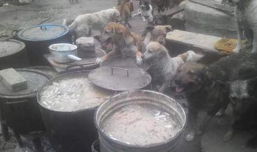 Неравнодушные граждане собрали деньги на корм для собак в приюте.