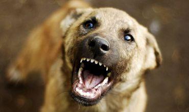 Жителя Криково оштрафовали за то, что он натравливал собаку на прохожих