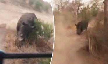 Носорог преследовал автомобиль с туристами около 2 минут.