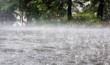 Прошедшие дожди размыли километры дорог и уничтожили гектары подсолнечника.
