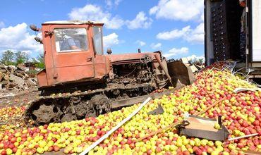 Более 30 тонн молдавских яблок были уничтожены в России.