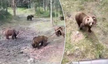 Опубликовано видео с окружившей людей группой голодных медведей