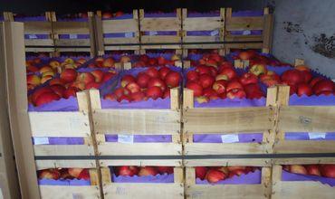 В партии яблок общим весом 19,755 тонны, поступивших из Молдовы, был обнаружен карантинный объект.