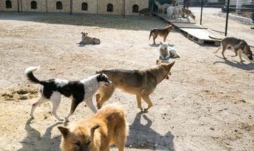 Более 900 человек подверглись нападениям бродячих собак с начала года