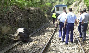 Во Франции нарушено ж/д сообщение из-за столкновения поезда с пятью коровами.