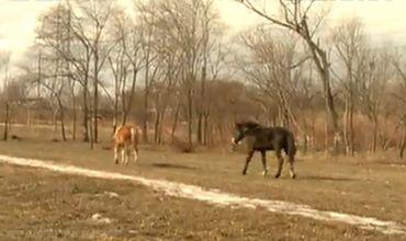 В Кишиневе полицейские целый день бегали за беспризорными лошадьми