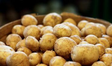 Выращивать картофель в республике стало невыгодно.