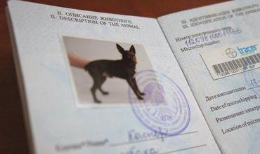 Всем животным в Молдове выдадут паспорта.