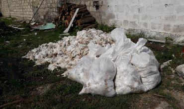 В Комрате из-за непогоды на ферме погибло 19 тыс. цыплят