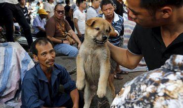 Фестиваль проходит в Юйлине с 21 июня — дня празднования летнего солнцестояния. Фото: masterok.livejournal.com