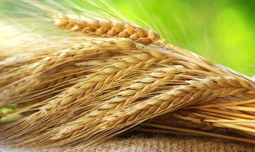 Молдавские фермеры в 2018 году экспортировали в страны ЕС 20 тысяч тонн экологически чистых зерновых.