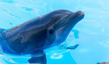 Дельфины поют своим будущим детям во время беременности.